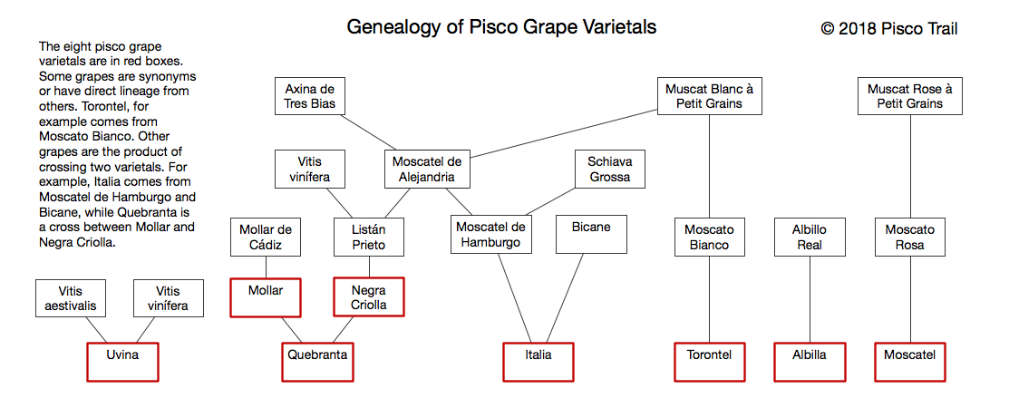 pisco grape varietals, negra criolla, moscatel, peruvian pisco, craft pisco, piscologia, types of pisco grapes, quebranta, acholado