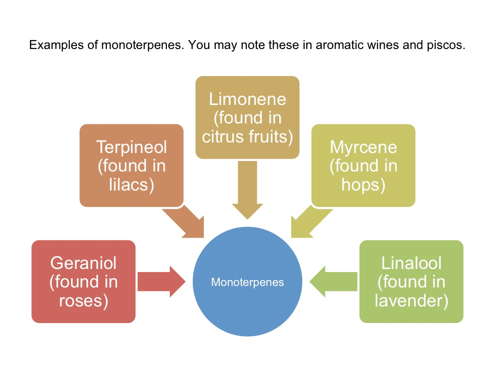 monoterpenes, aromatic wine, aromatic pisco