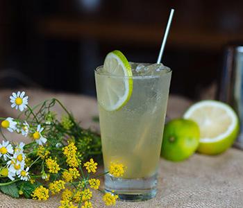 peruvian pisco, pisco cocktail, piscologia